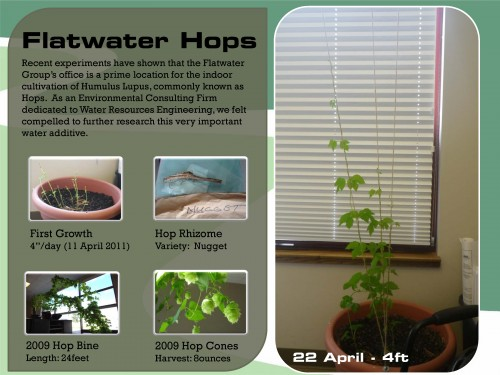 Flatwater Hops